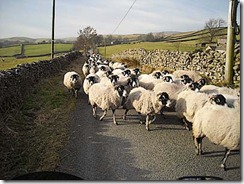 Sheep Convoy