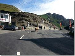 Col du Tourmalet Llamas