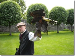 Andy and the Harris Hawk